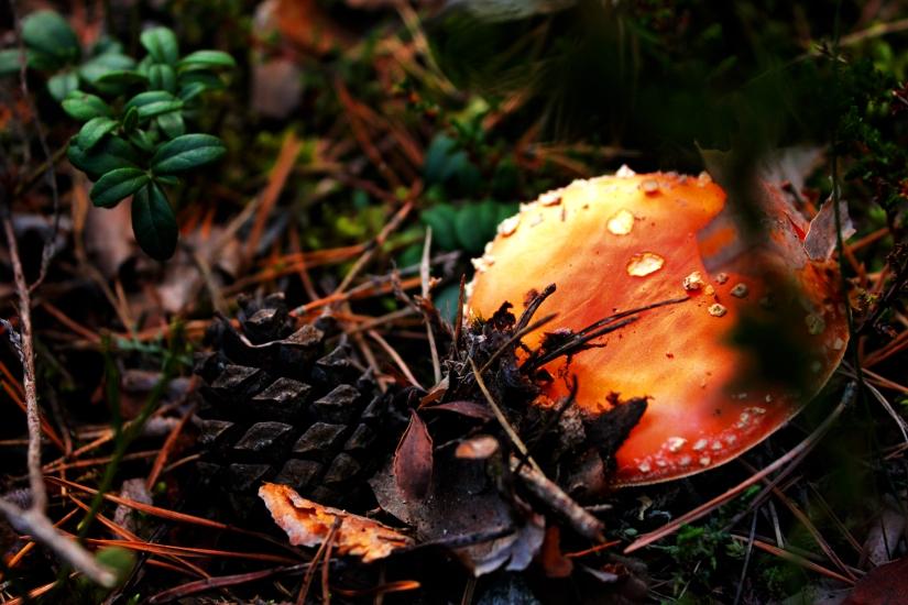 Photo Gallery: AutumnWorld